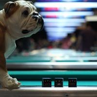 Billiards chalk at PoolDawg.com