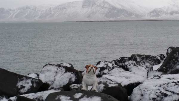 Frank T. Dawg Invades Iceland